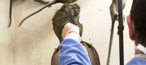 Behind the scenes at a primate lab