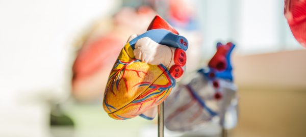 Cureheart: gene therapy for genetic heart diseases