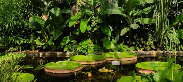 Oxford Botanic Garden Live